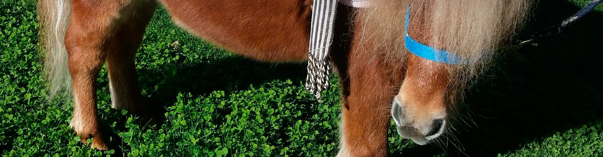 Cumpleaños con caballos en Torrejón de Ardoz