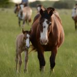 Fiestas de cumpleaños con Ponys y Caballos