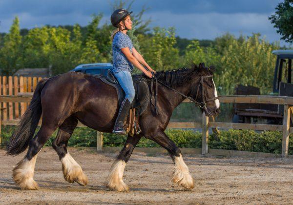 Paseos a caballo para niños en Coslada