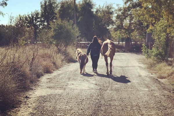Paseos a caballo para niños en San Fernando de Henares