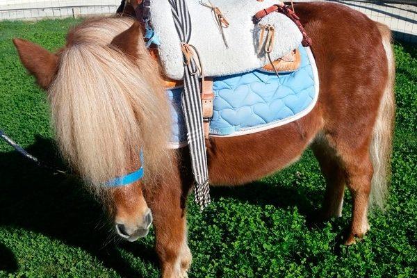 Paseos en pony para niños en Madrid