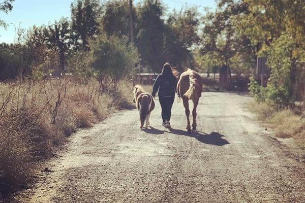Paseos en pony para niños en Torrejón de Ardoz