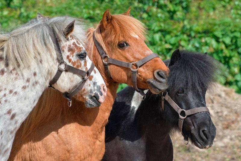 Pasar un día con un pony