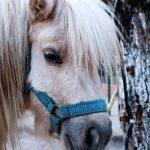 Primer contacto con el pony