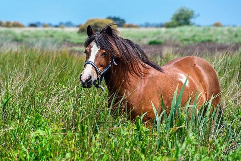Curiosidades sobre los caballos que no conocías