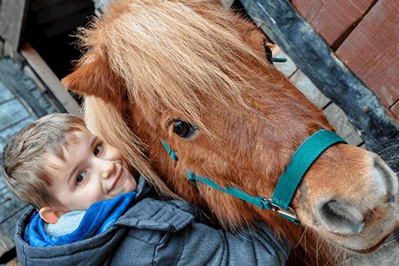 Realizar paseos en pony para niños en Madrid
